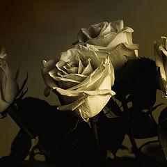 """фото """"Розы"""""""