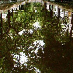 "фото ""Reflected Trees"""