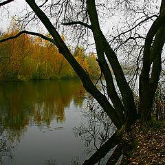 """фото """"Осенний силуэт"""""""