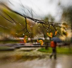 "photo ""Last chord of autumn"""