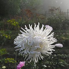 "album ""Foggy morning"""