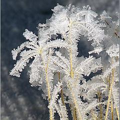 """фото """"Зимние цветы"""""""