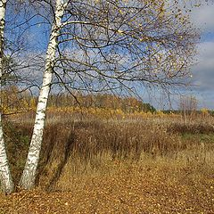 "photo ""Golden Autumn of Central Russia"""