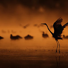 "фото ""dancing in the fog"""