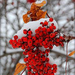 """фото """"В саду горит костер рябины красной..."""""""