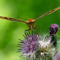 "фотоальбом ""Butterfly"""
