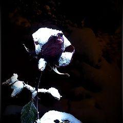 """фото """"Вот и зима"""""""