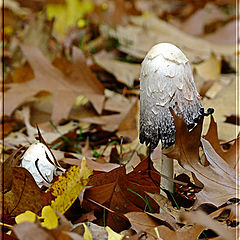 """фото """"Осень"""""""