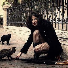 "photo ""Cats"""