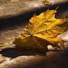 """фото """"...прощальный лист осенний..."""""""