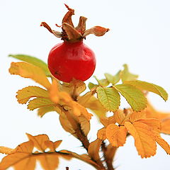"""photo """"Has ripened"""""""