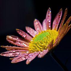 "фото ""Autumn flower"""