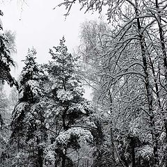 "photo ""first snow"""