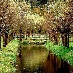 """фото """"Autumn colors"""""""
