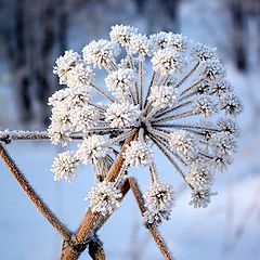 "фото ""Зимующий цветок"""