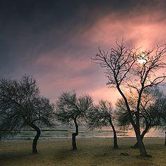"""photo """"winter sun"""""""