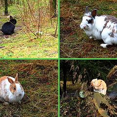 "photo ""Brothers rabbits"""