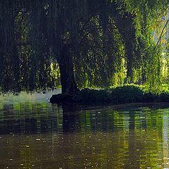 "фото ""old pond"""