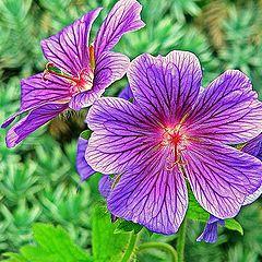 """photo """"Woodland Flowers"""""""
