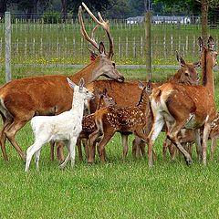 """photo """"Deer Family"""""""