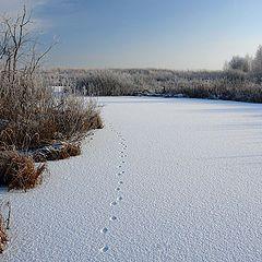 """фото """"Зимнее озеро."""""""