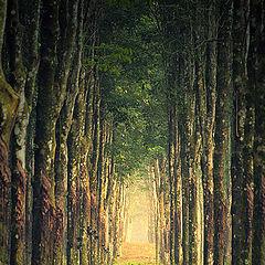 """photo """"corridor"""""""
