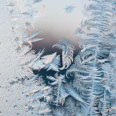 """фото """"ice rose"""""""
