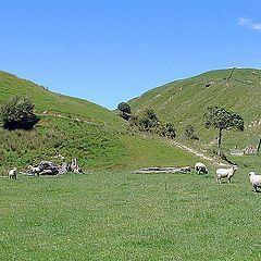 "photo ""Hill Country Sheep Farm."""