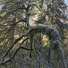 """photo """"Rainforest under dew"""""""