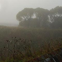 """фото """"В осеннем тумане..."""""""