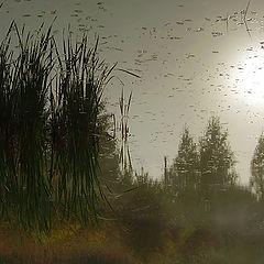 "фото ""Графика осеннего утра"""