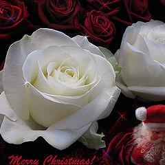 "photo ""Merry Xmas, dear friends!"""