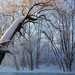 """фото """"Зимний сон"""""""