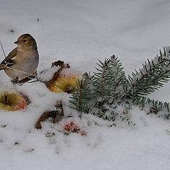 "фото ""Натюрморт  с птичкой"""