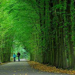 "photo ""green tunnel"""