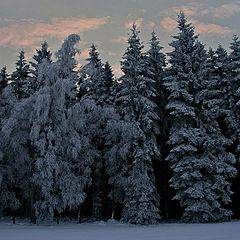 "фото ""Winterwonderland"""