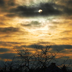 "photo ""Early Winter Evening  Sun"""