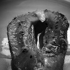 """photo """"kiwi  on a plate"""""""