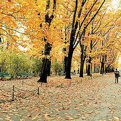 """фото """"Autumn scenery"""""""