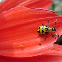 """photo """"Lady Bug"""""""