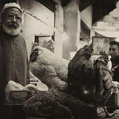 """photo """"chickenmen..."""""""