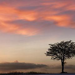 "photo ""Simply Winter"""