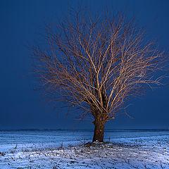 "photo ""Lonely tree at dusk"""
