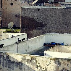 "photo ""Morning Medina, Safi (Marocco)"""