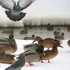 """photo """"Bird Kingdom"""""""