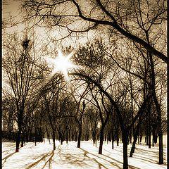 """фото """"Сто долгих дней снег был сильней..."""""""