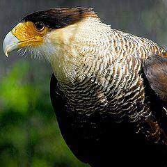 "фото ""big bird"""