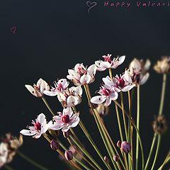 """фото """"happy valentine's day 2"""""""