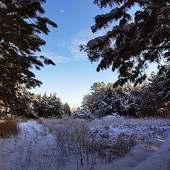 """фото """"Прогулки при Луне..."""""""