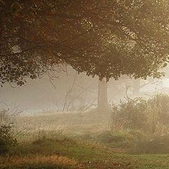 "photo ""I love the early morning"""
